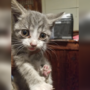 Kitten needs a home after rescue near east Columbus recreation center