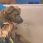 Pet Refuge Pet of the Week: Nova