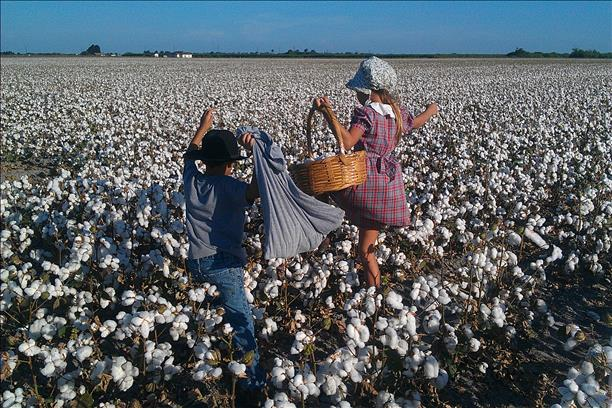 <a  href=&quot;http://share.valleycentral.com/media/3789511&quot;>Pickin' Cotton</a>