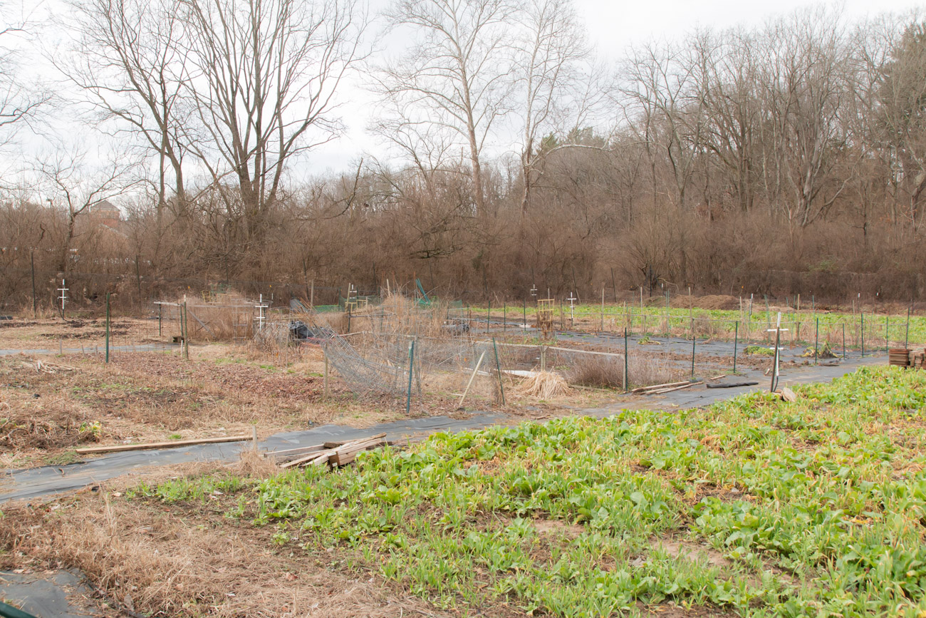 "Programs at the nature preserve include a community garden where people can rent 5x20 foot plots to grow their own produce. There's also a plant rescue program where volunteers collect thousands of unwanted plants from nurseries and grow and harvest them at the property to donate. ""Last year we rescued 5,000 plants and in 2018 we donated about 6,000 pounds of produce, about 99 percent of which goes to La Soupe,"" Vanessa Hannah says. / Image: Elizabeth A. Lowry // Published: 2.25.20"