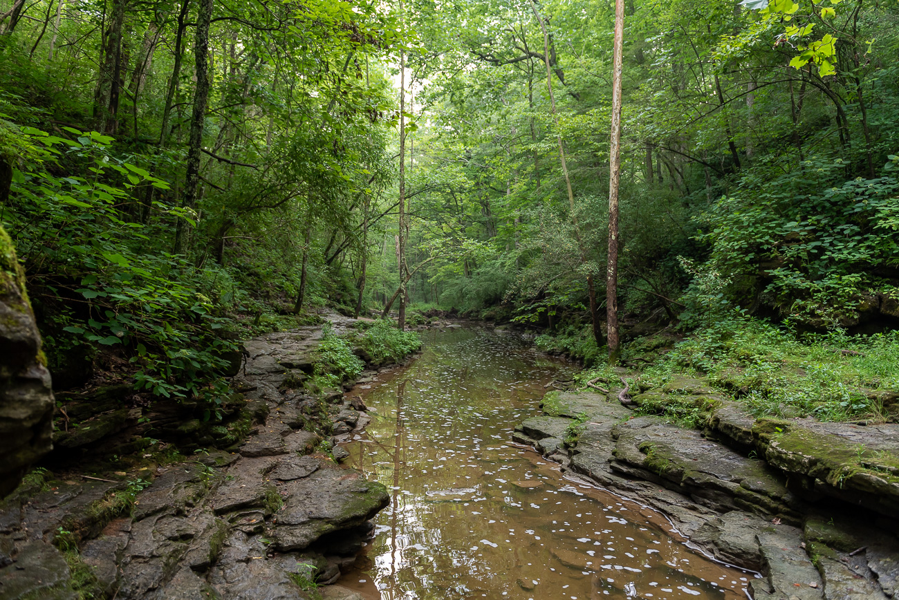 The trailhead to the falls is on a gated road located off of Careytown Road. The path is mostly level except for the descent into the wooded gorge where the 15-foot falls is located. / Image: Mike Menke // Published: 8.21.20