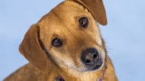 Photos: 10 adoptable pets from Woodinville Homeward Pet