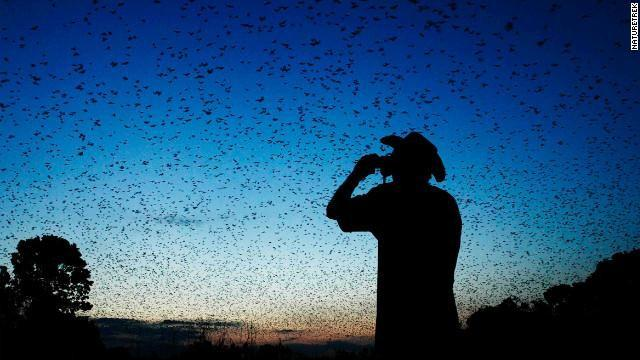Five million bats cluster together in one tiny corner of Zambia's Kasanka National Park every November.