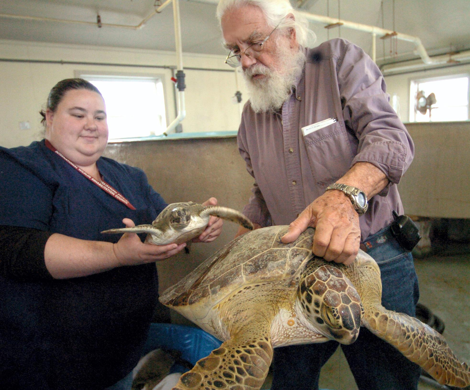 FILE - In this Jan. 11, 2010, file photo, Candice Mottet, left, and Tony Amos, director of the Animal Rehabilitation Keep in Port Aransas, Texas, hold the smallest and biggest green sea turtles that came ashore because of cold temperatures. (AP Photo/Corpus Christi Caller-Times, George Gongora, File)