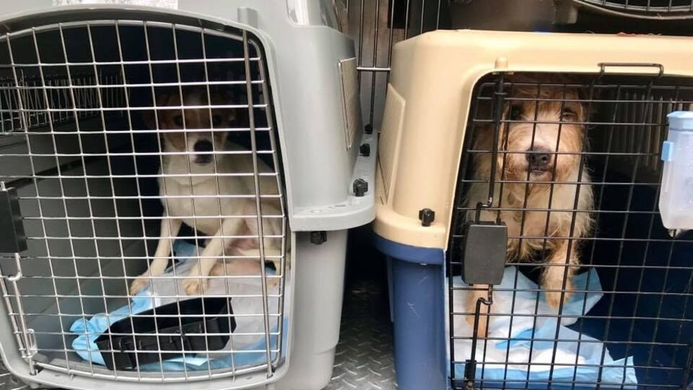 12 rescue dogs linked to disgraced former Westminster Kennel