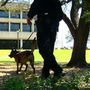 Gun powder sniffing K-9 will be sent to Alachua County Public Schools
