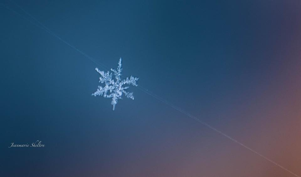 A snowflake sits suspended on a spider web (Photo: Jeanmarie Shelton)