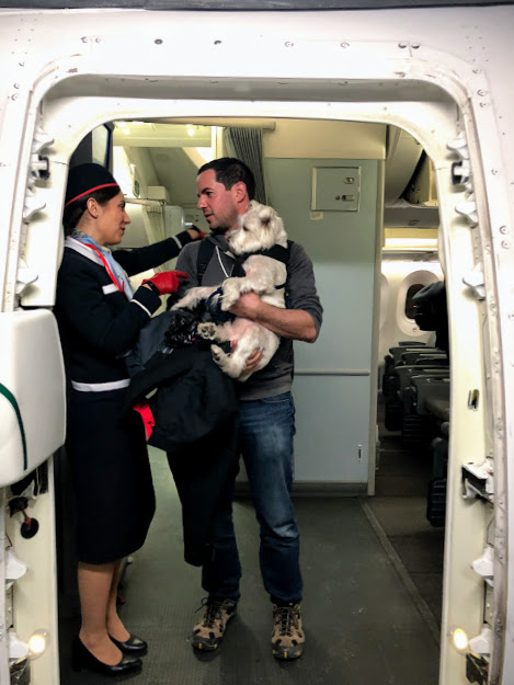 <p>Prepare Your Paperwork -- If you are traveling with a service animal or ESA, be sure to travel with all of the appropriate certificates. (Image: Amanda Shapin)</p>