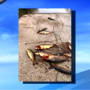 Kalamazoo River boat launch reopened after dozens of discarded carp carcasses found