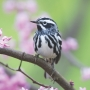 Spring tips for bird-watchers