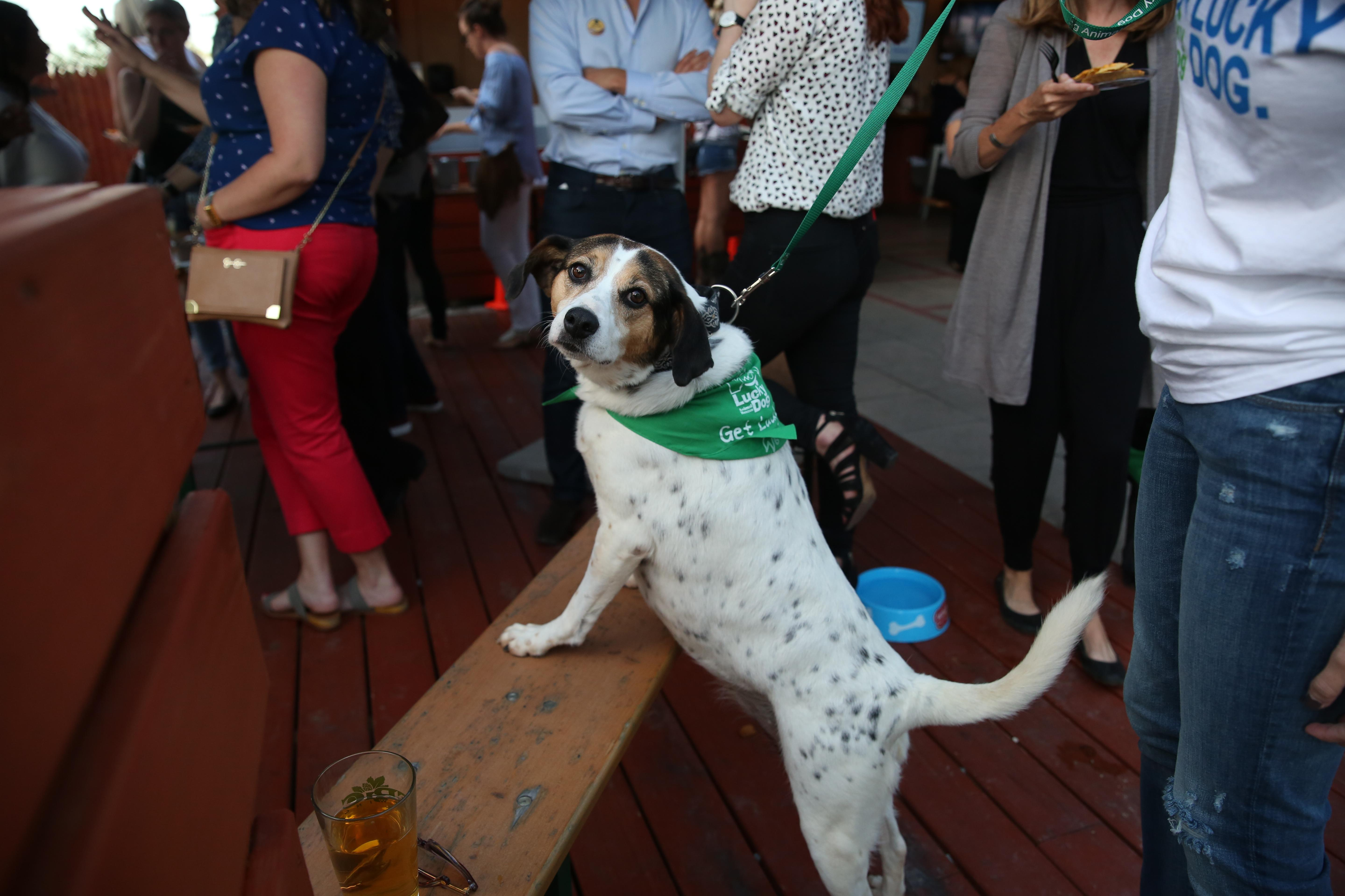After our photoshoot with D.C.'s most eligible bachelors and adoptable pets from Lucky Dog Rescue, we hosted a yappy hour at The Brig on Sept. 7 so fans could meet our men and maybe walk away with a new best friend! (Amanda Andrade-Rhoades/DC Refined)