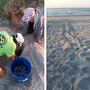 First sea turtle nest of the season found in Myrtle Beach