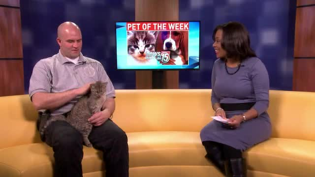 Pet of the Week: Prissy