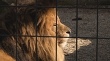 SPECIAL REPORT: How Potawatomi Zoo works to protect animals and visitors