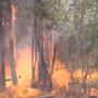 Brian Head Fire grows to 46,000 acres, is 10 percent contained