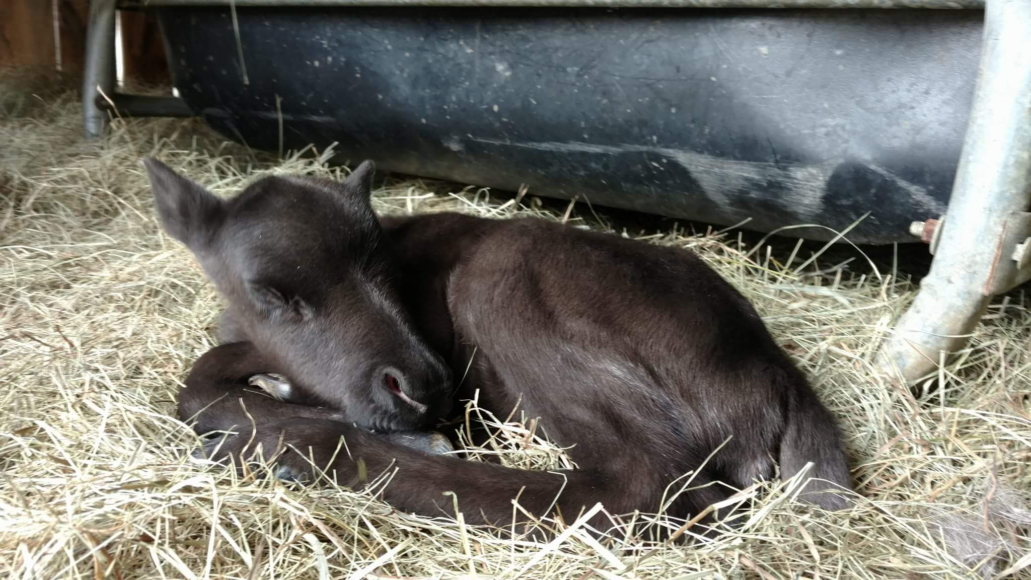 <p>The owner said they have theonly reindeer in the state and Mistletoeis the first reindeer born in Maine in 20 years. (Courtesy: Ed Papsis){&amp;nbsp;}</p>