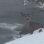 RAW VIDEO: Firefighter rescues deer from frozen pond in La Porte County