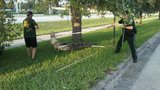 Alligator captured near mall in central Florida