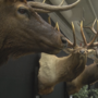 Over 100 Exhibits at the 29th annual Sportsmen Show