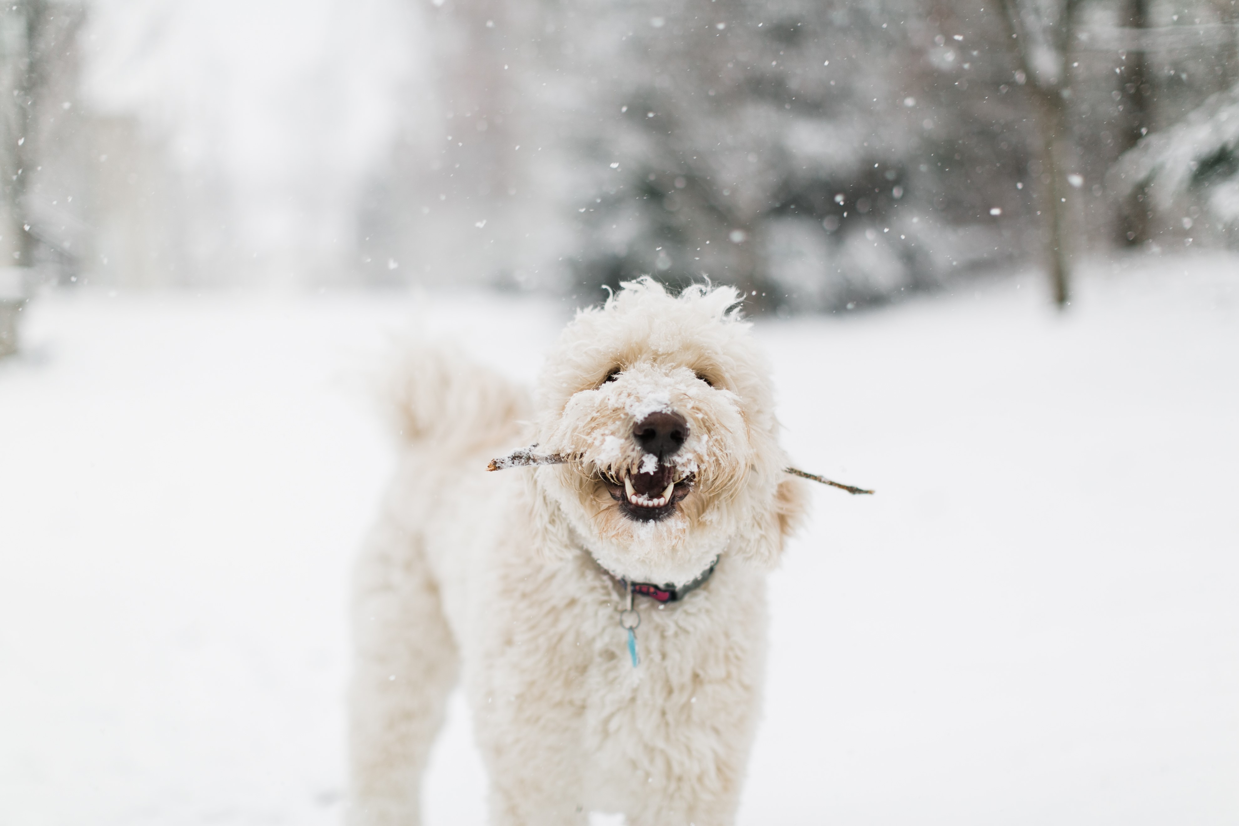 D.C. finally got its first real snowfall of the season -- on March 21! Given that it's the probably the only flakes we'll see for a while, the pups of the DMV decided to really live it up. Check out a few of the adorable pets we spotted chilling in the snow today!{ } (Image: Courtesy IG user @mroddaphoto)