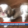 Support dog stolen during home invasion, rash of break-ins at Mobile apt complex