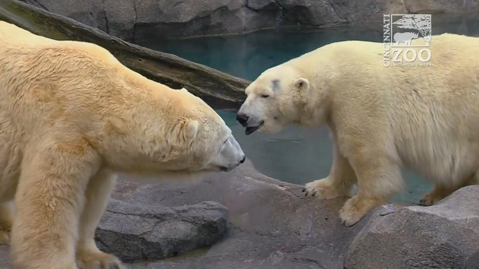 Big bear bonks a cub