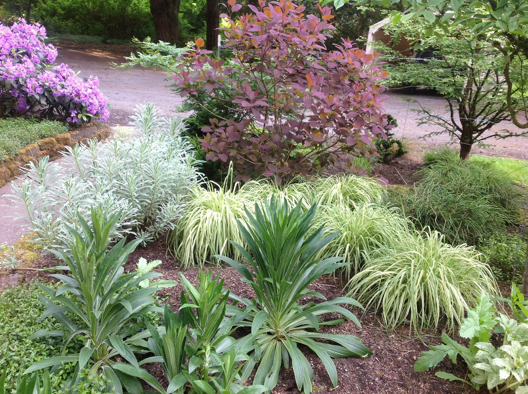 On Saturday, June 22, you are cordially invited to five private gardens in Bainbridge Island, through the Garden Conservancy Open Days program, 10 a.m. to 4 p.m. The Open Day is rain or shine, and no reservations are required. Admission is $10 per garden; children 12 and under are free. 4895 Rose Avenue. This is a large, eight-acre property that includes multiple gardens, both enclosed and integrated into the surrounding field and forest, with a wide array of flowers, unusual plants, and exotic trees, as well as sculptures and other artwork throughout (Image courtesy of Stephanie Werskey).