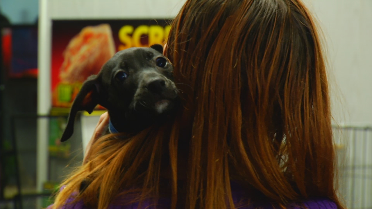 "The owners of Fish and More Pet Store, in Sylva, are proud to be the first pet store in the state to begin ""adopting out"" rescued dogs, cats, kittens and puppies from shelters across the state. (Photo credit: WLOS staff)"