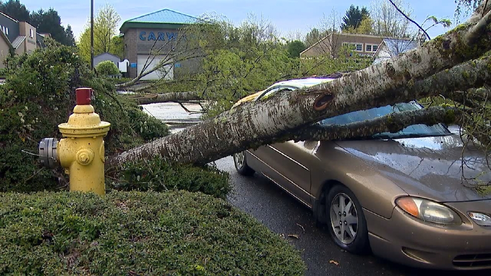 "What is a ""Wet Microburst""? The cause of the stormy mayhem in Thurston County"