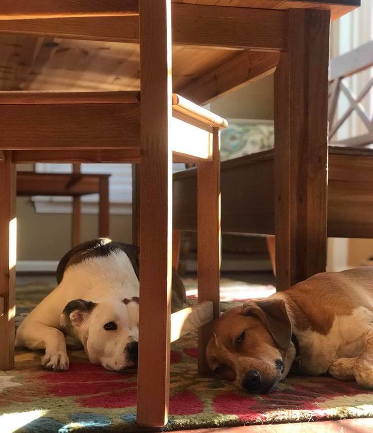 Look at your phone - what was the last photo you took of your pets? We asked our readers on Facebook - and it's pretty hilarious! Click through for sleepy dogs, fat cats - and even a guinea pig! (Image: Courtesy Julie Spurlin)