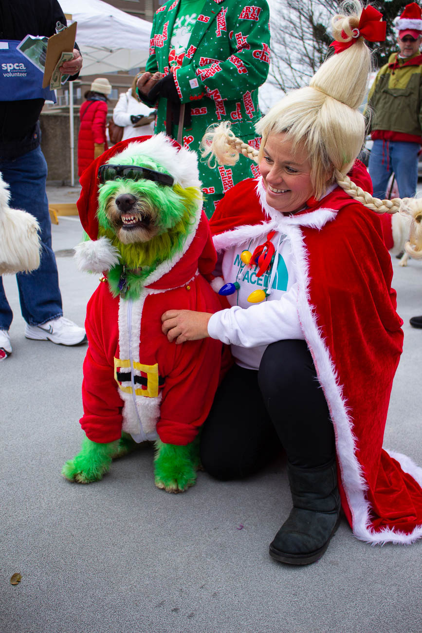 Annie Rose came painted in full-green-Grinch, alongside her Cindy Lou Hoo owner at the annual Reindog Parade in Mount Adams on December 8. She won Pet Valu's Best in Show award! / Image: Katie Robinson, Cincinnati Refined // Published: 1.3.19
