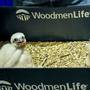 WoodmenLife wants help naming trio of falcon chicks