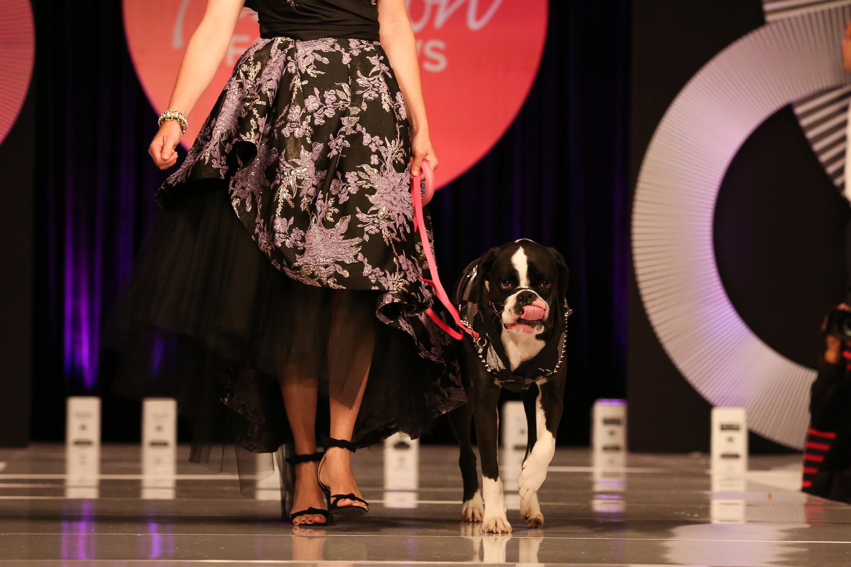 On May 5, animal lovers walking their dogs strutted down the runway of the Omni Shoreham Hotel to raise money for the Humane Rescue Alliance. The annual event honors the organization's top fundraisers and encourages others to give - this year, philanthropists raised over $365,000 for the animals. Dogs who are looking for forever homes were also featured on the runway, guided by HRA volunteers. (Amanda Andrade-Rhoades/DC Refined)