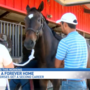 Finding homes for retired Thoroughbreds