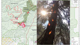 Caught on camera: Forest fire burns tree from the inside out