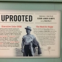 Uprooted exhibit: 'Everyone in our Asian community should come take a look at this'