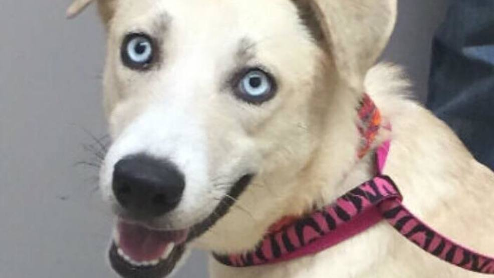 Rescue Dogs For Adoption Maine