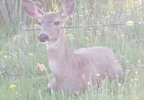 DEER SHOT PHOTO 5.PNG