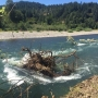 'The current is likely to push people into it': Hazard tree reported in Willamette River
