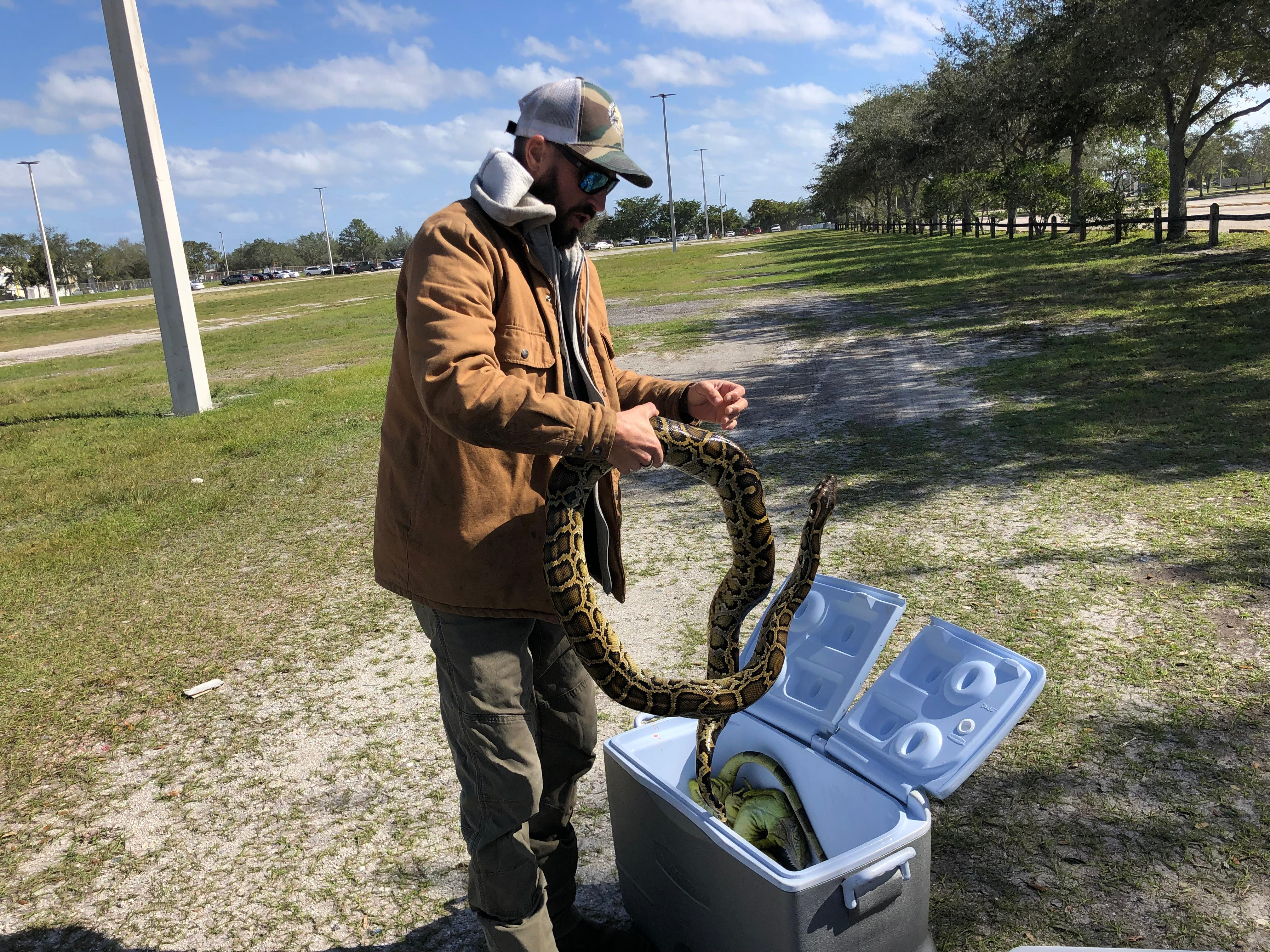 The competition has processionals and amateurs spend ten days in the Everglades, catching as many pythons as possible. (WPEC)<p></p>