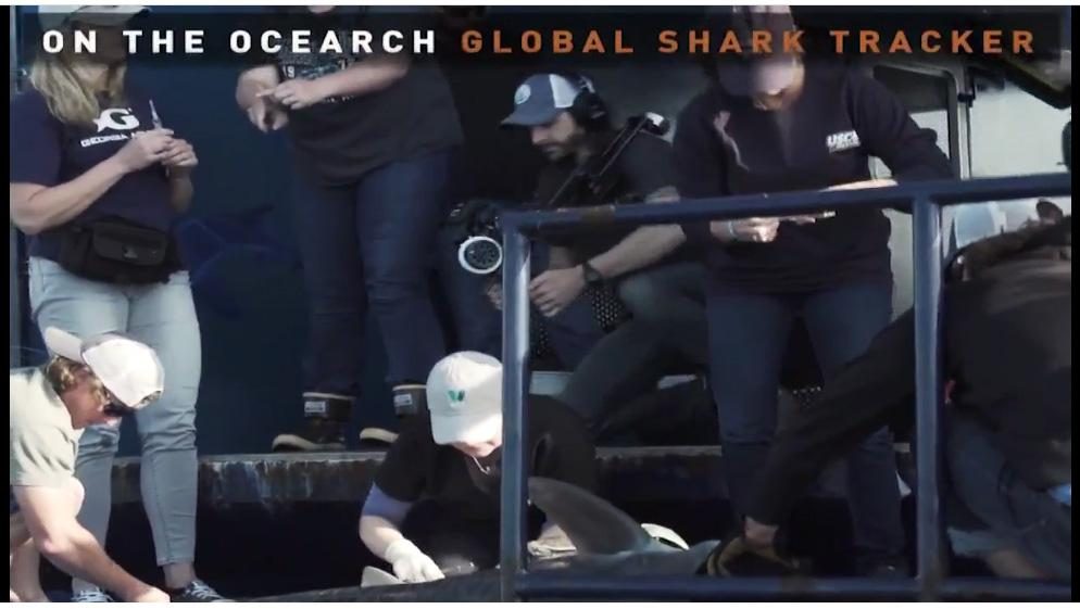 Photo provided by OCEARCH