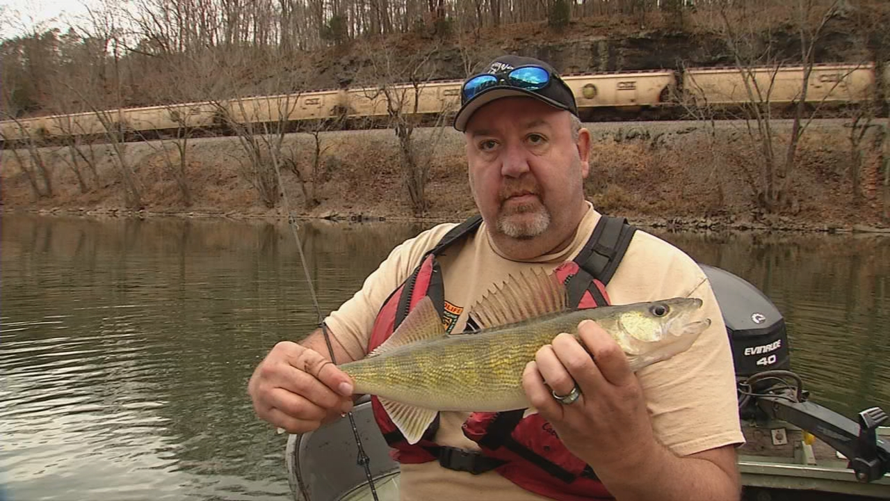 WVDNR fisheries biologist, and walleye angler, Mark Scott, has been stocking native walleye fingerlings across some of our rivers the past several years. This work, along with walleye regulations, will help ensure that these fish continue to live in our waters for years to come. (WCHS/WVAH){&amp;nbsp;}<p></p>
