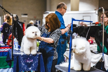 Photos: Touring the Grooming Room of the Seattle Dog Show
