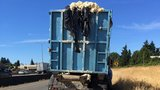 Semi hauling dough in summer heat overflows with gooey mess on I-5