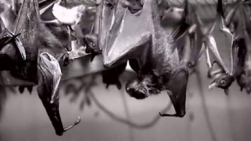 Rabid Bat Found In North Little Rock Apartment