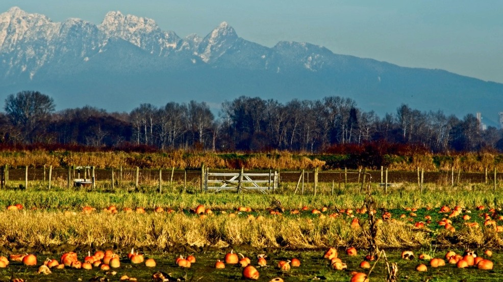 9 popular pumpkin patches less than an hour from Seattle