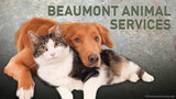 Beaumont Animal Services: Check Pine Street shelter, Ford Park for missing animals
