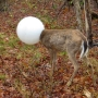 Officer rescues deer that had its head caught in light globe