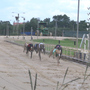 Amendment 13: Florida voters will decide if Greyhound racing will be banned