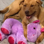 Stray dog who befriended purple unicorn finds adopter